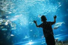 Allvarlig pojke som ser i akvarium med den tropiska fisken royaltyfri fotografi