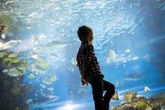 Allvarlig pojke som ser i akvarium med den tropiska fisken royaltyfria bilder