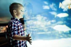 Allvarlig pojke som ser i akvarium med den tropiska fisken royaltyfri bild