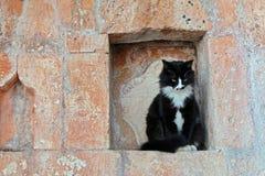 Allvarlig svart katt i en gammal nisch för tegelstenvägg Royaltyfria Foton
