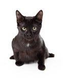 Allvarliga svarta Kitten In Pounce Stance Fotografering för Bildbyråer