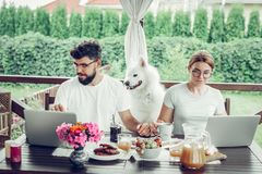 Allvarligt fokuserat gift par som kopplar in i avlägset arbete på bärbara datorer royaltyfria bilder