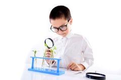 Almácigo asiático joven de la planta del control del muchacho en laboratorio Fotos de archivo libres de regalías