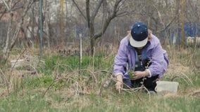 Almácigo de trasplante de la flor de la mujer del jardinero en tierra en el campo Garde almacen de video