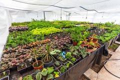Almácigos crecientes en potes Plantas que siembran en invernadero moderno, horticultura y el cultivo de la botánica de planes orn imagen de archivo libre de regalías