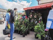 Almácigos de compra en el mercado de los granjeros Rusia Gatchina Otoño 2017 foto de archivo libre de regalías