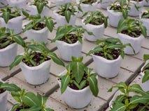 Almácigos de la flor del cuarto de niños en suelo del musgo de turba Fotos de archivo libres de regalías