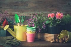 Almácigos de las plantas y de las flores de jardín en macetas Regadera, cubos, pala, rastrillo, guantes fotos de archivo