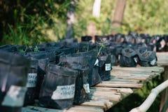 Almácigos de plantas antes de la replantación imágenes de archivo libres de regalías