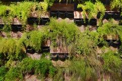 Almácigos de plantas decorativas en las cajas de madera como a casa pared de la decoración foto de archivo