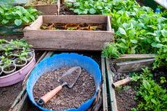 Almácigos en bandejas y potes en el invernadero Fotos de archivo