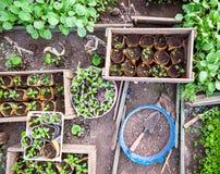 Almácigos en bandejas y potes en el invernadero Imágenes de archivo libres de regalías
