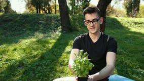 Almácigos jovenes de la albahaca crecidos en las hojas verdes de los potes, sanas e intensas Un hombre joven en vidrios sostiene  almacen de video