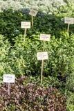 Almácigos jovenes de plantas con los precios en el estante de una tienda herbaria imagen de archivo