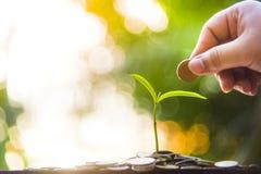 Almácigos plantados en vidrio con las monedas de los ahorros Ideas de los ahorros