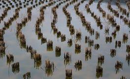 Almácigos secos Imagen de archivo libre de regalías