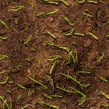 Almácigos smal verdes en suelo Imagenes de archivo