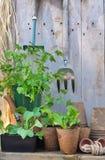 Almácigos y herramientas que cultivan un huerto Foto de archivo