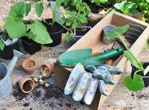 Almácigos y semillas para la plantación con las herramientas agardening Fotografía de archivo libre de regalías