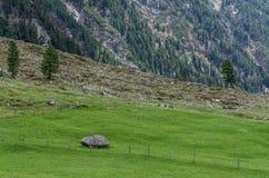 alm verde con le rocce Fotografia Stock Libera da Diritti