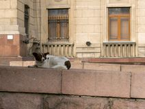 Alma Ata, Kazachstan, dakloze hond stock afbeeldingen