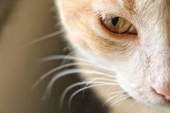 Alma de un gato Foto de archivo libre de regalías