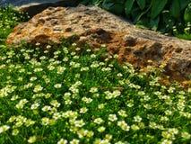 A alma gosta de flores Imagens de Stock