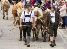 Almabtrieb e Viehscheid in Baviera Fotografia Stock Libera da Diritti