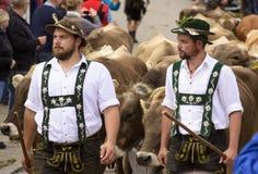 Almabtrieb en Viehscheid in Beieren Stock Foto's