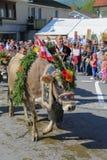Almabzug - ceremoniel som kör ner nötkreaturet från berget Fotografering för Bildbyråer