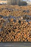 Almacenaje del registro en un molino de la madera de construcción Fotos de archivo libres de regalías