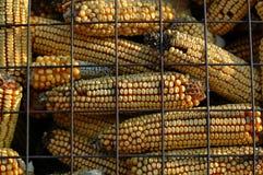 Almacenaje seco del maíz Fotografía de archivo libre de regalías