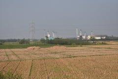 Almacenamiento de la paja del arroz en el bosque del verdor del casuarina cerca en una pequeña fábrica fotografía de archivo