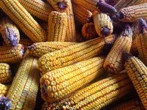 almacenamiento del maíz Fotografía de archivo