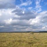 Almacene el parque nacional de Mosse Fotos de archivo