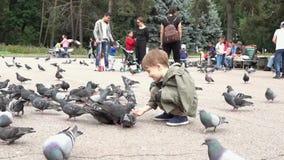 Almaty, Kazajistán - 20170531 - las palomas come fuera de la mano del muchacho en parque almacen de video