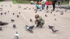 Almaty, Kazajistán - 20170531 - muchacho alimenta palomas en parque metrajes