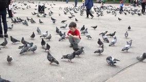 Almaty, Kazajistán - 20170531 - muchacho comparte su comida con las palomas en parque almacen de metraje de vídeo