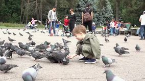 Almaty, Kazakhstan - 20170531 - Pigeons eat out of hand of boy in park. stock video