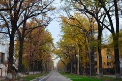 Almaty miasta ulicy Obrazy Royalty Free