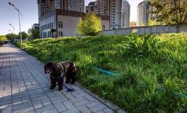 Almaty stad Arkivbilder