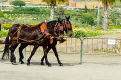 ALMAYATE,西班牙- 2018 4月22日,传统安达卢西亚的比赛 免版税库存照片