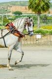 ALMAYATE,西班牙- 2018 4月22日,传统安达卢西亚的比赛 库存图片