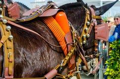 ALMAYATE,西班牙- 2018 4月22日,传统安达卢西亚的比赛 免版税图库摄影