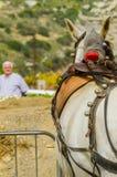 ALMAYATE HISZPANIA, KWIECIEŃ, - 22, 2018 Tradycyjny Andaluzyjski konkurs Zdjęcie Royalty Free
