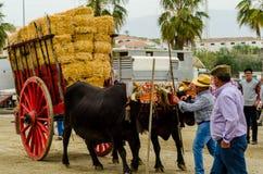 ALMAYATE HISZPANIA, KWIECIEŃ, - 21, 2018 Tradycyjny Andaluzyjski konkurs Obrazy Royalty Free