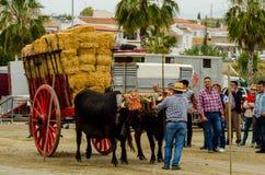 ALMAYATE HISZPANIA, KWIECIEŃ, - 21, 2018 Tradycyjny Andaluzyjski konkurs Zdjęcie Royalty Free