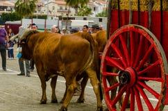 ALMAYATE HISZPANIA, KWIECIEŃ, - 21, 2018 Tradycyjny Andaluzyjski konkurs Zdjęcie Stock