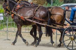 ALMAYATE, SPAIN - APRIL 22, 2018 Traditional Andalusian contest based on the presentation of the ability to drive horse with cart. ALMAYATE, SPAIN - APRIL 22 Royalty Free Stock Images