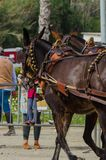 ALMAYATE, SPAIN - APRIL 22, 2018 Traditional Andalusian contest based on the presentation of the ability to drive horse with cart. ALMAYATE, SPAIN - APRIL 22 Royalty Free Stock Image